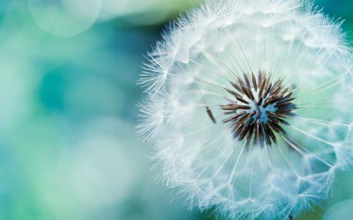 Stress release-de kracht van adem